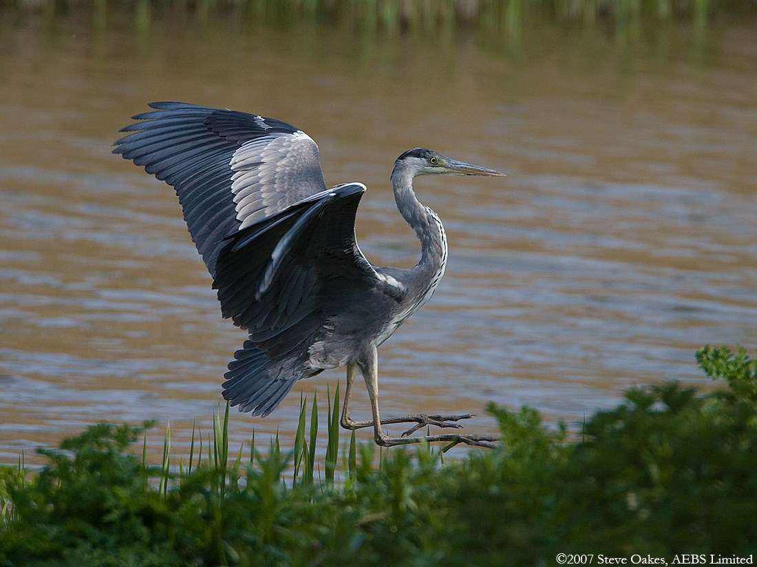 heron dating Complete order of blue heron books in publication order  looking to get back on the scene and start dating again she hopes to  book series in order.